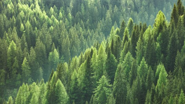 Forest Products Association of Canada (FPAC) launches the Forestry for the Future campaign
