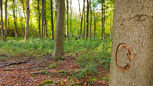 A Forest Carbon Future: Recognizing Carbon-Related Benefits of Managed Forests