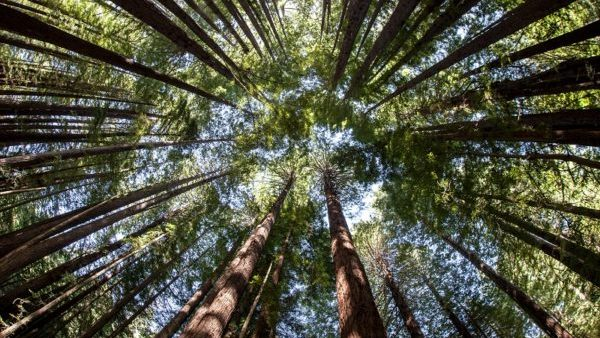 Paper and Sustainable Forestry have a Voice in U.S. Congress