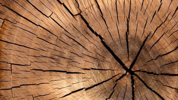 CD Howe Report Explores the Future of Canada's Forest Products Sector