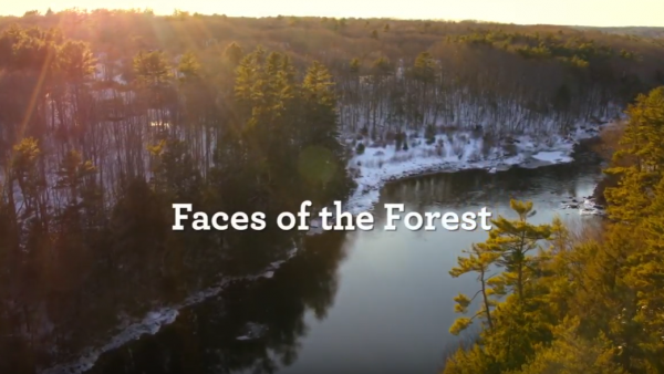 Faces of the Forest: Meet the Town of Falmouth, Maine