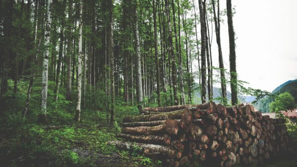 The Economic Impact and Utilization of Working Forests in the U.S.