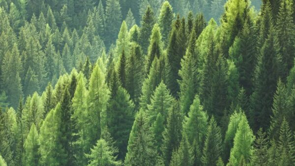 Paper-Based Packaging Supports Healthy Forests In North America